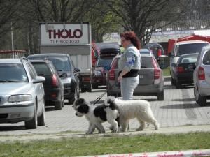 Yvonne Samuelsson med några av sina fina hundar, storstjärnan Speedie längst bak.