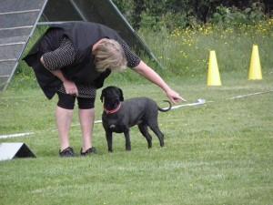 Först går man igenom banan muntligt med hunden och talar om vad den ska göra..........