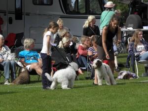 Dagens yngsta handler med en liten söt vit perro som var på bushumör.
