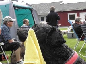Bubblan var inte lika intresserad som de andra, det stod ju någon bakom med en burgare!