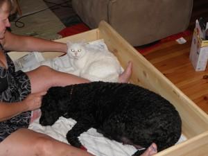 Katten Beda sällskapar gärna också! Tur att lådan rymmer så många tjejer!
